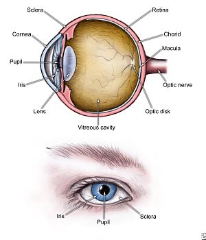 Newport beach ca lasik eye surgeon ophthalmologist for crystalens of course the big picture is much more complex than that there are dozens of parts to the eye and many ways that things can begin to go wrong ccuart Gallery